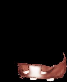 Maus Albino