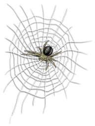 Leinwand und Spinnengefängnis