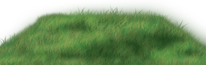 Picknick-Gras