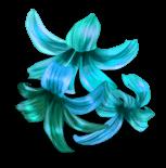 Überraschen Sie Blumen