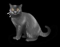 Katzenhexe