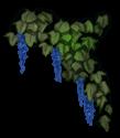 Elfenblume