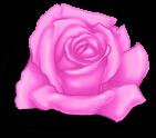 Kleiner rosa Valentinstag
