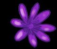 Große Blume