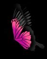 Großartiger Schmetterling
