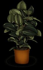 Pflanze zurück