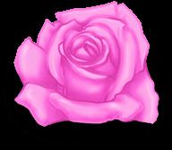 Großer Rosen-Valentinstag