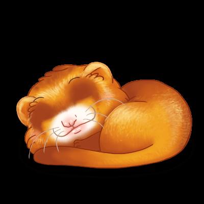 Adoptiere einen Frettchen Karamell