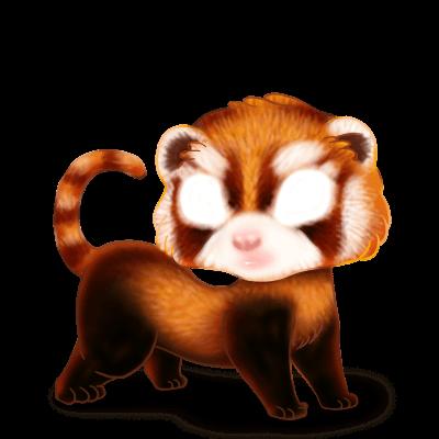 Adoptiere einen Frettchen Panda Roux