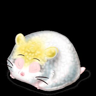 Adoptiere einen Hamster Kakadu