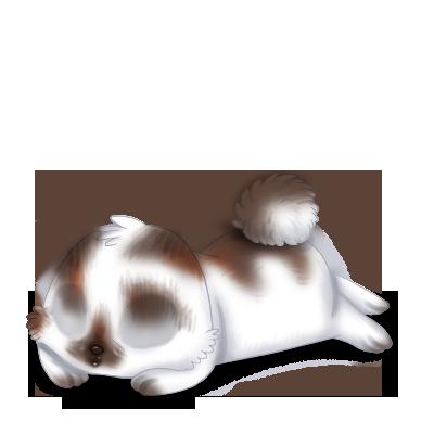 Adoptiere einen Kaninchen Braun und Weiß