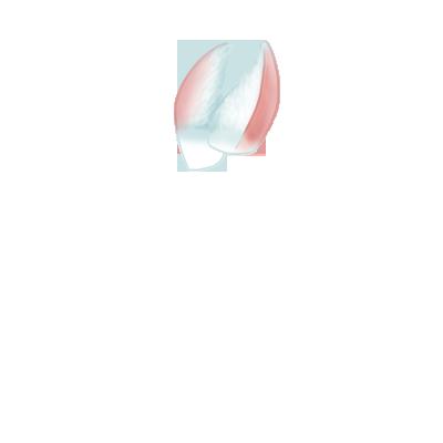 Adoptiere einen Kaninchen Cromimi