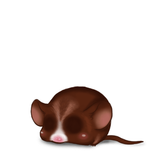 Adoptiere einen Maus Choco