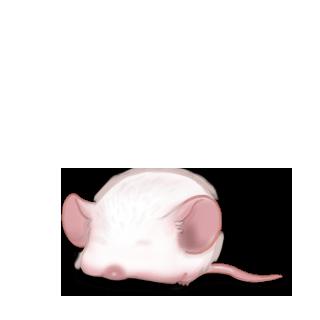 Adoptiere einen Maus Kastanie