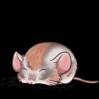 Adoptiere einen Maus Angora