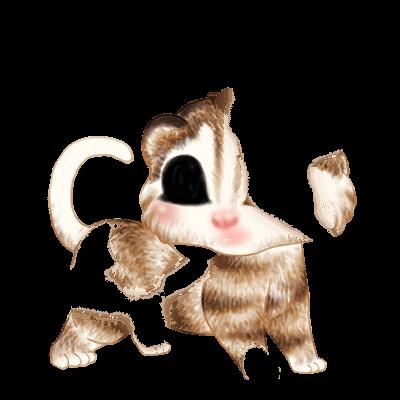 Adoptiere einen Frettchen Husky Brown