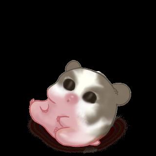 Adoptiere einen Hamster Praline