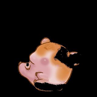 Adoptiere einen Hamster Syrien