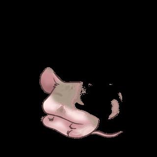 Adoptiere einen Maus Albino