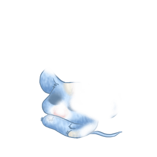 Adoptiere einen Maus Pastellblau