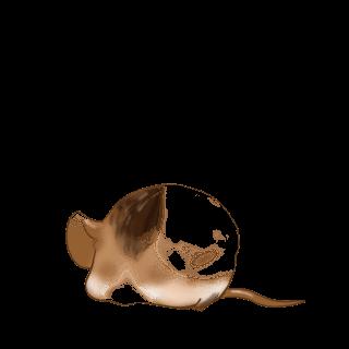 Adoptiere einen Maus Weiß