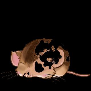 Adoptiere einen Maus Cromimi