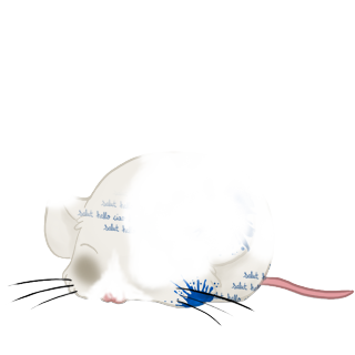 Maus Chocolat au lait