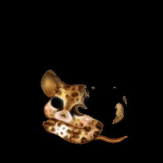 Adoptiere einen Maus Husky Brown
