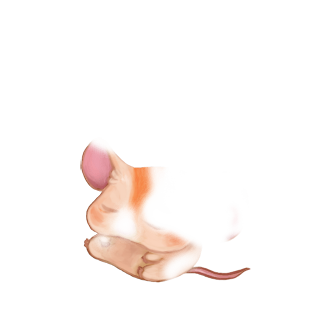 Adoptiere einen Maus