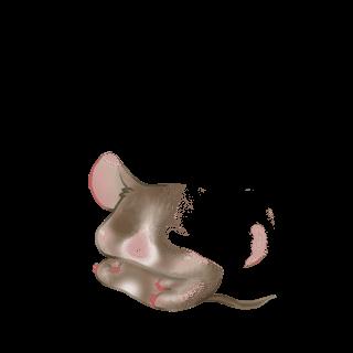 Adoptiere einen Maus Schokolade