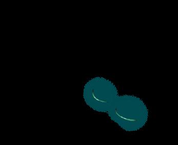 Adoptiere einen Frettchen Türkis